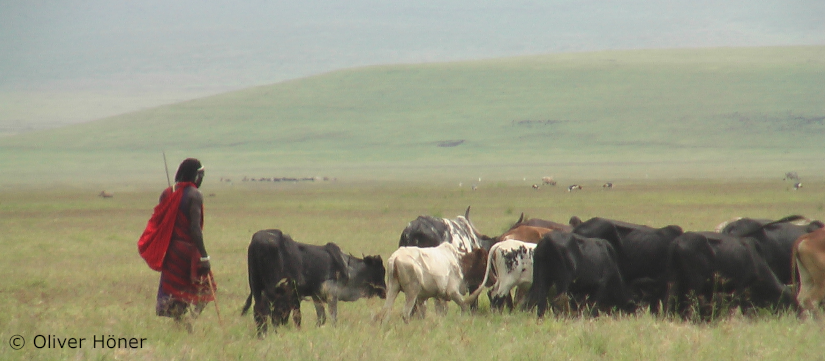 """Emotions and cultural importance help us understand the """"beef"""" between pastoralists and largecarnivores"""